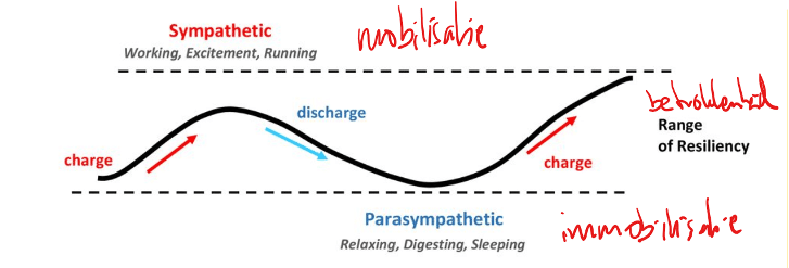 Figuur 1 . Het wipwapeffect dat ontstaat bij een optimale lichamelijke balans tussen energieverbruik en energieherstel. Dit is de basis voor de dagelijkse ritmes van je lijf.